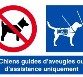 Nouvelle signalétique pour les chiens guides !