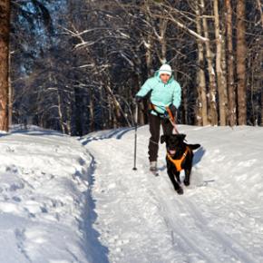 L'appel des cimes : vacances d'hiver adaptées