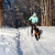 photo-ski-chien-handicap